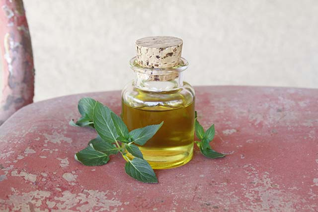 homemade peppermint oil